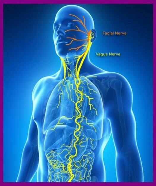 praying the rosary stimulates the vagus nerve to relax the body